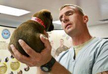 Come curare la tracheite nel cane