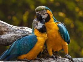pappagalli esotici